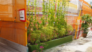 Potted plants located around the worksite to create a more pleasant environment